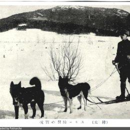 Лыжная прогулка с собаками