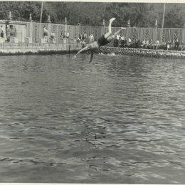 Открытый бассейн в городском парке Южно-Сахалинска, середина 1950-х годов.