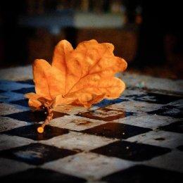 ТОП-5 самых заметных событий сентября в сахалинских шахматах